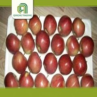 Hot selling granny red star apple for wholesales