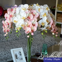 white and pink hot sale purple butterfly orchid wholesale