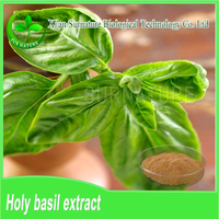 Food Grade Pure Holy basil extract/Basil Leaves P.E./tulsi leaves P.E.