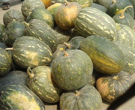 Fresh Pumpkins High Quality