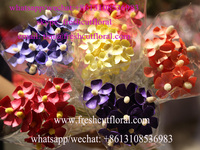 Great Quality Pictures Of Dried Flower Arrangements As Great Gift