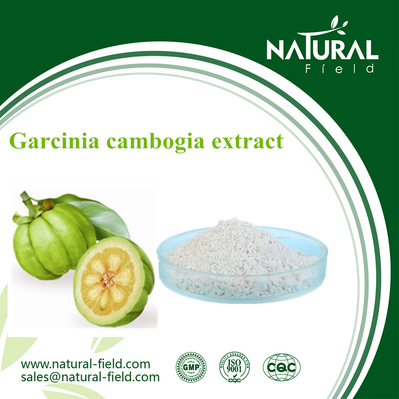 Garcinia Cambogia Dried Extract Powder With Great Stock