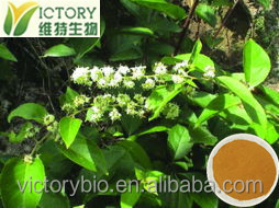 manufacturer supply tripterygium wilfordii hook.f. extract powder