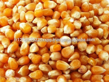Grade AAA Yellow Corn / Yellow Maize / Yellow Corn Grains for sale
