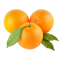 High quality orange and citrus fruit