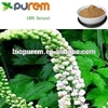 Black Cohosh Extract Powder, Triterpene Glycosides 2.5%