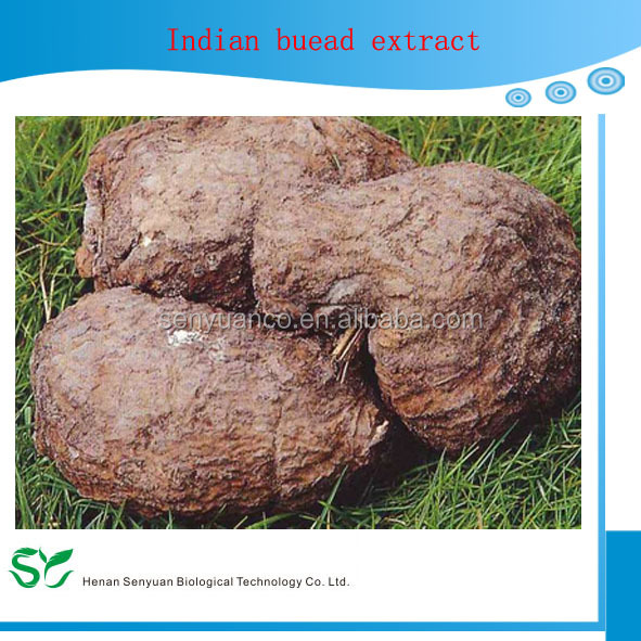 Plant Indian Buead Extract