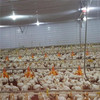 contemporary best selling indian poultry farm with feed pan/nipple drink/cooling pad/tunnel fan