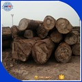 Africa low price teak wood logs