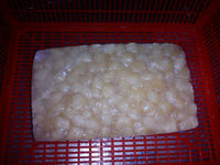 Frozen Scallop Meat Blocked/IQF