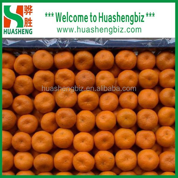 Hot Selling High Quality Baby Mandarin