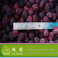 China Frozen Blackberry From Professional Frozen Fruits Berry Supplier