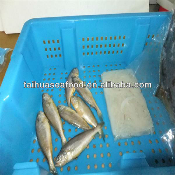 fresh deep sea yellow fish and whiting frozen fish