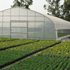 Cheap Tunnel Green House Baolida Vegetable
