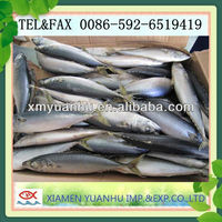 Frozen Seafish Pacific Mackerel/scomber Japonicus W/r From China