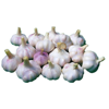 /product-detail/2019-best-purple-white-fresh-natural-garlic-for-export-62143320425.html