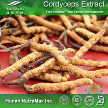 Cordyceps Sinensis Plant Extract (Japanese Name: Tochukaso) for sales