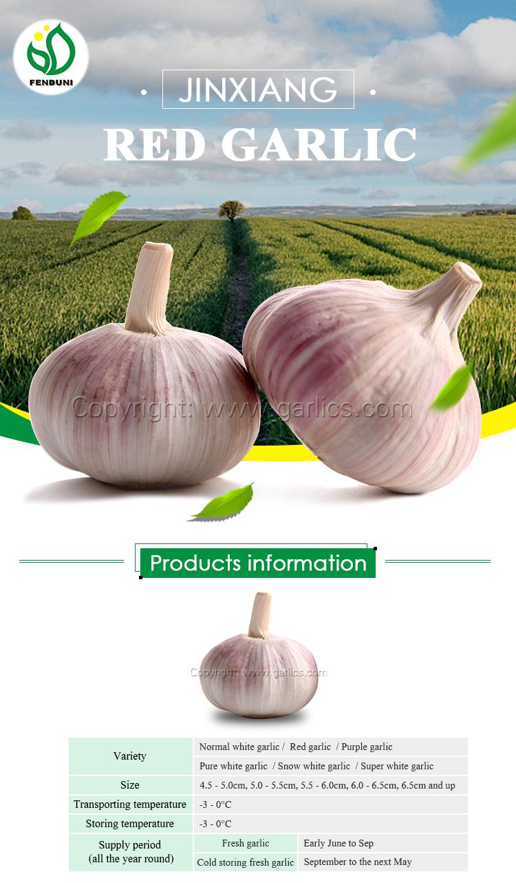 Jinxiang Fresh Red Garlic (F60) - low cost, high quality