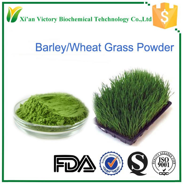 high quality certified organic green wheat grass powder