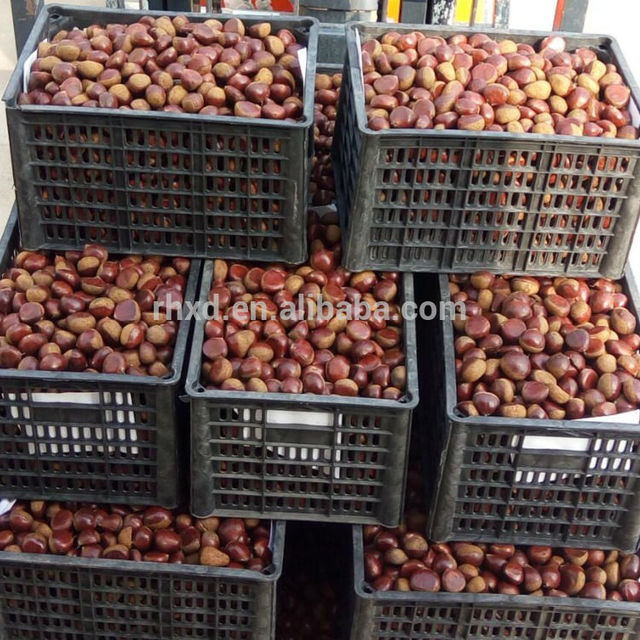fresh raw chestnuts from Shandong China exporter for USA