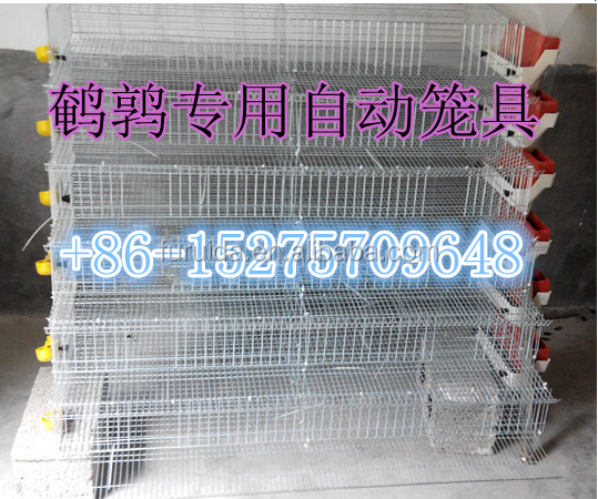 FRD-battery quail cages for egg layer quail and broiler quail