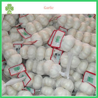 good quality farmer white dry garlic