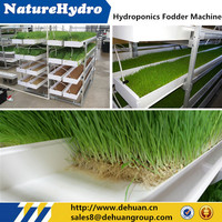 Greenhouse Hydroponic NFT System For Planting