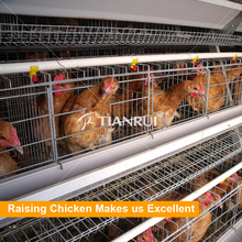 Automatic Poultry Breeder/Chicken Breeding Equipment