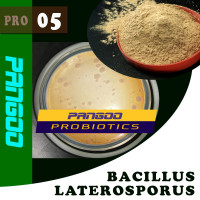 PANGOO PRO-05 BACILLUS LATEROSPORUS//BACILLUS/feed additives/FEED PROBIOTICS