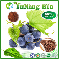 High quality Best prcie Grape Seed Extract powder form OPC 95%