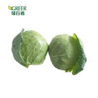 High quality fresh fresh vegetables cabbage