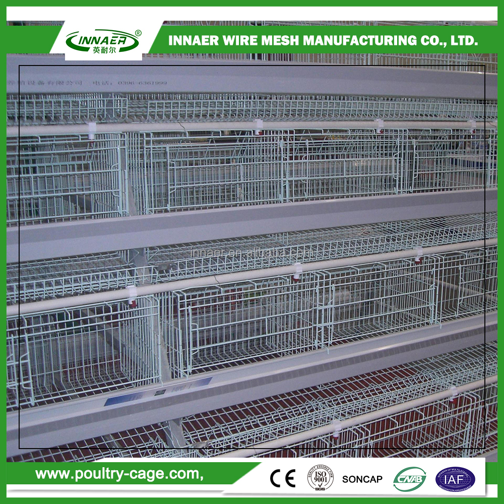 Made in China day old broiler chicks for sale