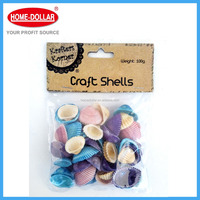 Craft Shells Natural shell crafts,craft supply,DIY Products