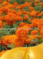 100% pure lutein marigold extracts