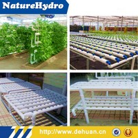 Agricultural Greenhouse Pipe Planting for Tomatoes/Peppers/Cucumbers/Even Roses