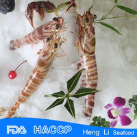 HL002 best quality seafood iqf cooked shrimp
