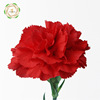 Multi Colored Flower Carnation Mother S