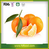 freeze dried Orange FD fruit price