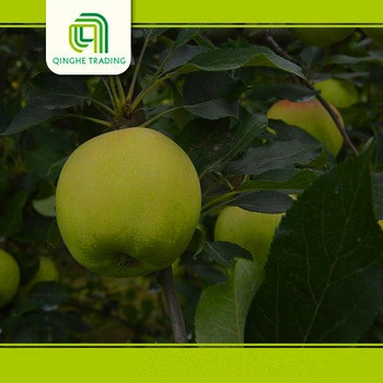 Hot selling import fruit for wholesales fresh royal gala organic sweet gala apples