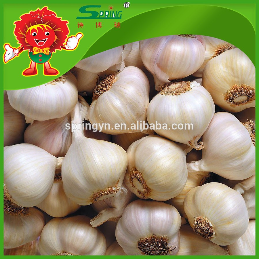 Fresh natural organic Hybrid garlic , whole sale, high quality health benefit