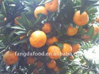 chinese new seasonal orange