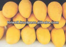 fresh mango ( different types)