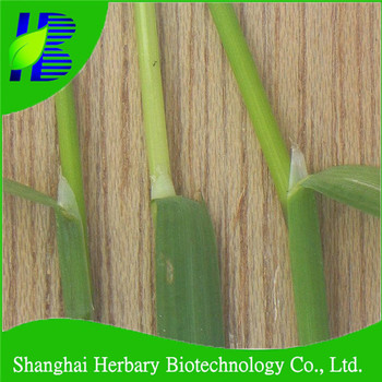 Saline-alkaline tolerance Poa annua grass seeds in bulk