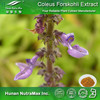 Forskolin Extract, Natural Forskolin Extract, Forskolin Extract 5:1