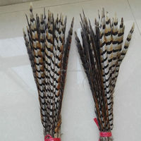 50-55cm reeves pheasant tail,Decoratio Event & Party Item Type reeves pheasant tail feathers