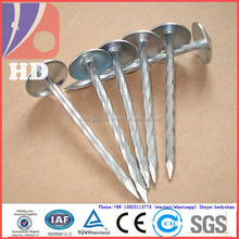 Galvanized roofing nail for asphalt shingles in roof