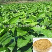 Natural Cortex Eucommiae/Eucommia Bark extract/Eucommia extract