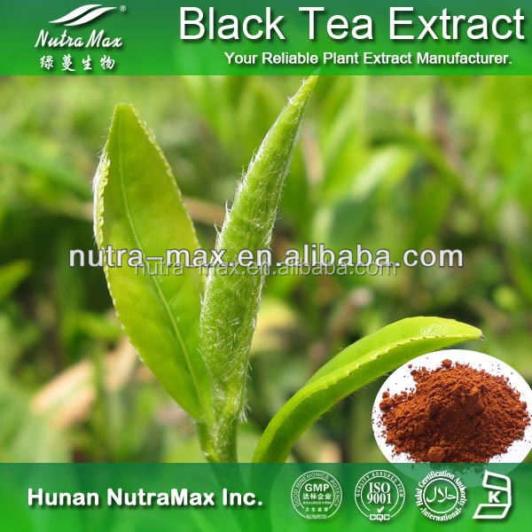 New Batch Black Tea P.E.//Instant Black Powder//Black Tea Powder Extract Polyphenols 20% 40%