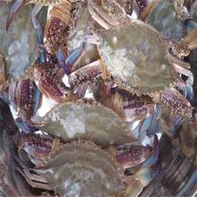 frozen blue swimming crabs seller with whole shell or half cut
