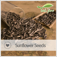 Chinese sunflower seeds round type